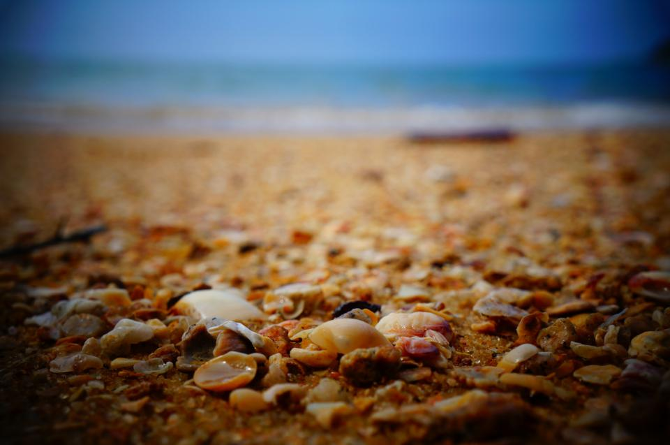 sea shells shore beach